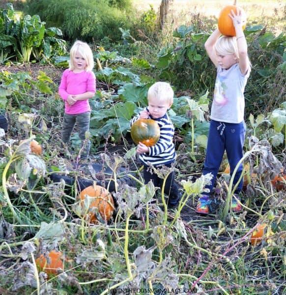 Kids Picking Pumpkins Harvest Party
